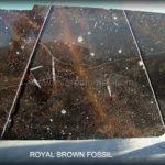 brown-fossil-10710-1.jpg