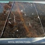 brown-fossil-10710-1.jpg